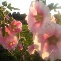 Entschleunigung: Blumen Augarten