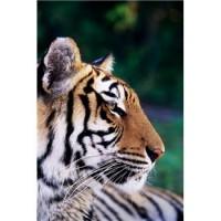 Entschleunigung wie ein Tiger